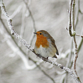 HEA000043-01