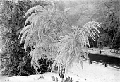 OHC000270-01